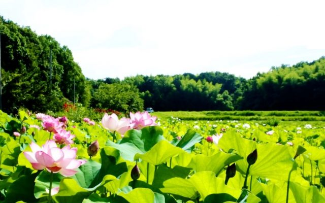 京都ホテルオークラ季節の旅「綾部を巡る」