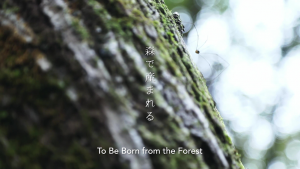 >To Be Born from the Forest