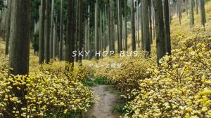 >SKY HOP BUS ぐるっと森の京都〈綾部編〉